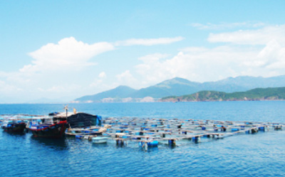 Copper-cage seafood farming proves effective