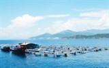 copper cage seafood farming proves effective