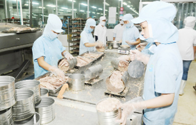 Tuna exports increase in quality