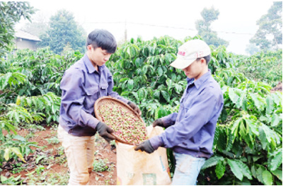 Agricultural technological application to be boosted
