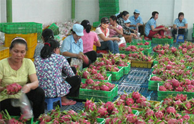 Globe's appetite for Vietnam fruit and vegetables grows