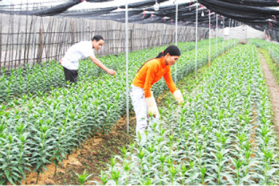 Bac Giang's economy records good growth